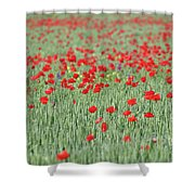 Green Wheat And Red Poppy Flowers Field Shower Curtain