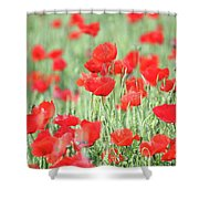 Green Wheat And Red Poppy Flowers Shower Curtain