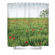 Green Wheat Field Spring Scene Shower Curtain