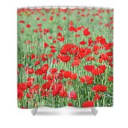 Green Wheat With Poppy Flowers Shower Curtain