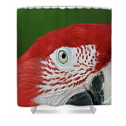 Green-winged Macaw Close Up Shower Curtain