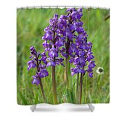 Green-winged Orchids Shower Curtain