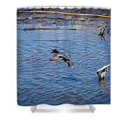 Green-winged Teal 4 Shower Curtain
