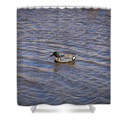 Green-winged Teal 5 Shower Curtain