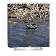 Green-winged Teal 7 Shower Curtain