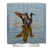 Blue Winged Teal Shower Curtain