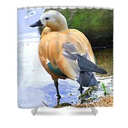Green Winged Wood Duck 1 Shower Curtain