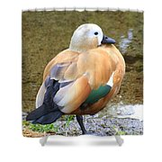 Green Winged Wood Duck 2 Shower Curtain