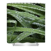 Green With Rain Drops Shower Curtain