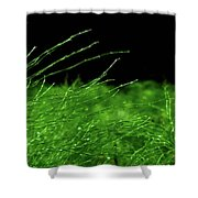 Greener On The Other Side. Shower Curtain