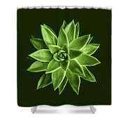 Greenery Succulent Echeveria Agavoides Flower Shower Curtain