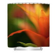 Greenhouse Heat Shower Curtain