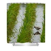 Greenshank Shower Curtain
