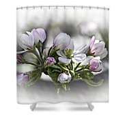 greeting card - Apple Blossoms  Shower Curtain