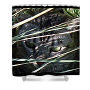 Greeting Card - Joe Joe In The Grass Shower Curtain