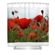 Greeting Card - Poppies In France Shower Curtain