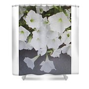 Greeting Card/sympathy Card Shower Curtain