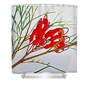 Grevilliea At Pilgrim Place In Claremont-california   Shower Curtain
