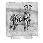 Grevy Zebra  5953bw Shower Curtain