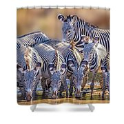 Grevy Zebra Party  7528 Shower Curtain