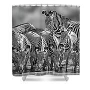 Grevy Zebra Party  7528bw Shower Curtain