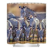Grevy Zebra Party  7528c Shower Curtain