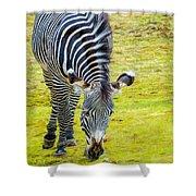 Grevys Zebra Left Shower Curtain