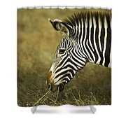 Grevy's Zebra Shower Curtain