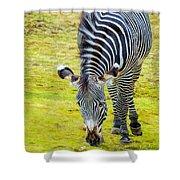 Grevys Zebra Right Shower Curtain