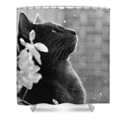 Grey Cat, Looking Up Shower Curtain