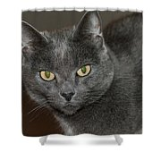 Grey Cat With Yellow Eyes Shower Curtain