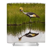 Grey Crowned Crane - Signed Shower Curtain