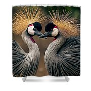 Grey Crowned Cranes Of Africa Shower Curtain