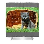 Grey Fluffy Kitten In Market Basket Shower Curtain