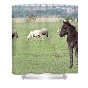 Grey Foal On Pasture Farm Scene Shower Curtain