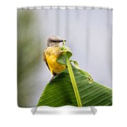 Grey Headed Tanager Shower Curtain