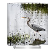 Grey Heron #3 Shower Curtain