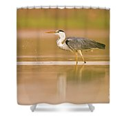 Grey Heron Ardea Cinerea Shower Curtain