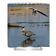 Grey Heron Being Mobbed Shower Curtain