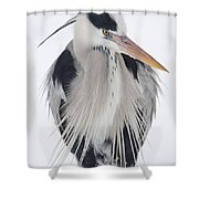 Grey Heron In The Snow Shower Curtain