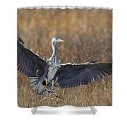 Grey Heron Landing Shower Curtain