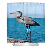Grey Heron Shower Curtain