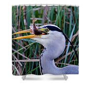 Grey Heron With Fish Shower Curtain