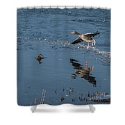 Grey Lag Goose Comes Into Land Shower Curtain