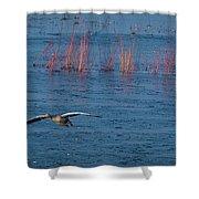 Grey Lag Goose In Flight Shower Curtain