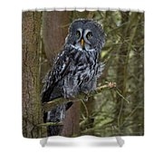 Grey Owl 3 Shower Curtain