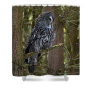 Grey Owl 4 Shower Curtain