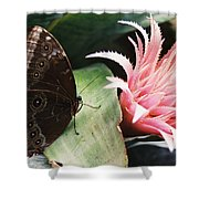 Grey Pansy Pink Bromeliad Shower Curtain