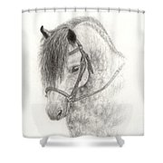 Grey Pony Shower Curtain