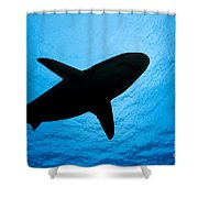 Grey Reef Shark Silhouette Shower Curtain